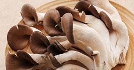 느타리버섯